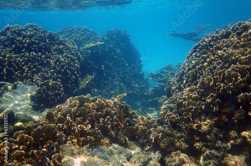 Underwater coral reef in the Caribbean sea