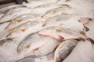 Ocaen fish on ice table in supermarket