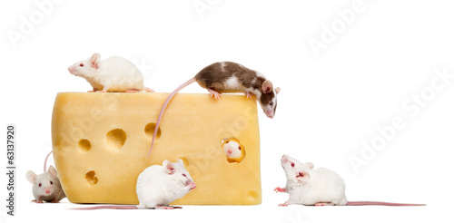 mouse on top of a big piece of cheese