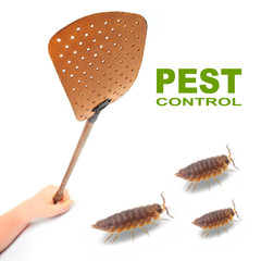Flyswatter and The Pill-bugs. Ecological pest control.