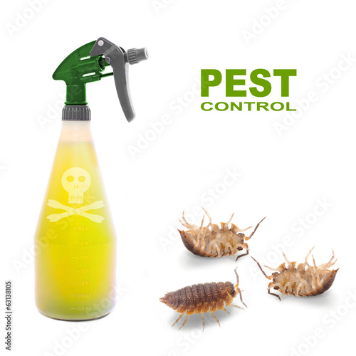 Plastic sprayer with insecticide and a bugs. Pest control.