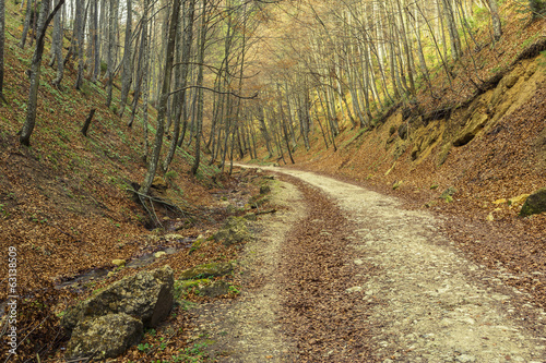 Hiking path in the forest in spring
