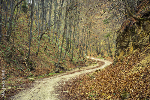 Winding pathway in dense deciduous forest in the spring