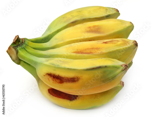 Wild banana of Southeast Asia