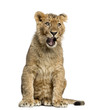 canvas print picture Lion cub sitting and yawning