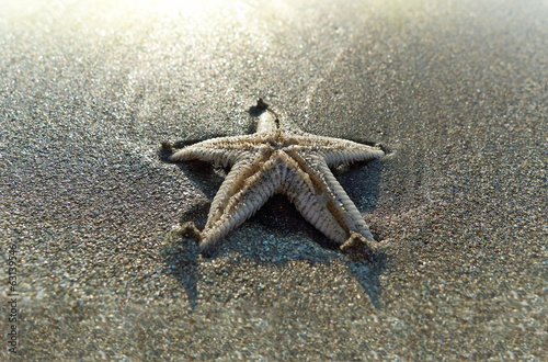 Starfish on the beach, buried in the sand