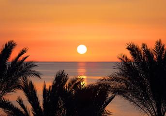 palms and sunrise over sea