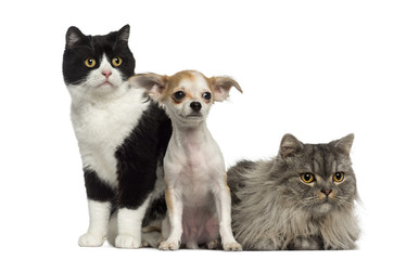 Group of cats and dog sitting and lying