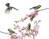group of great tit perched on a flowering branch, Parus major Kanvas Tablo