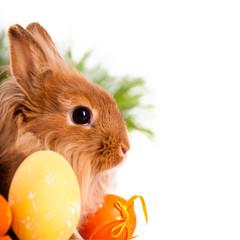 """bilder und videos suchen: """"bunte eier"""""""