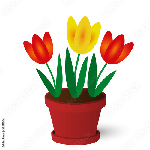 spring yellow and red tulips in red pot