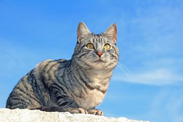 Katze auf der Mauer