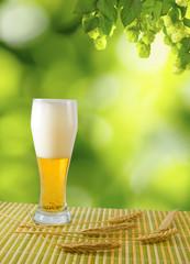 image of beer mug against hops background closeup
