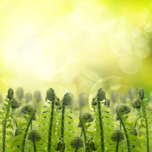 green ferm sprouts under sun