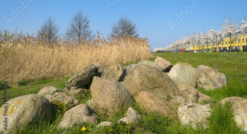 Rocks in front of cherry trees in bloom