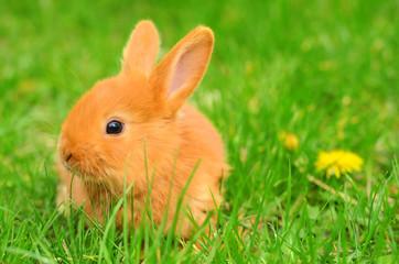 Baby bunny sitting in spring grass