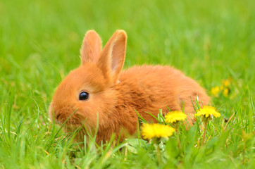 Baby bunny sitting in spring grass
