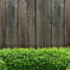 Buchsbaumhecke und Holzbretter