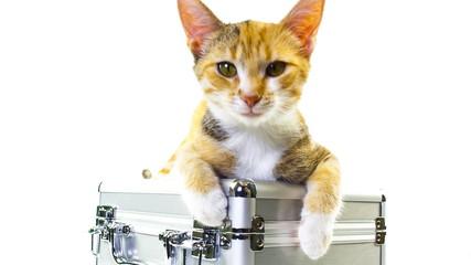 Kitten turns on case
