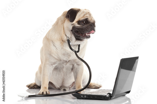 Pug dog with stethoscope and laptop.