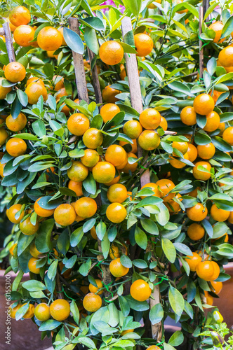kumquat lemon