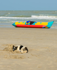 Dog sleeping on beach sand