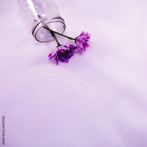 Purple chrysanthemums in a fallen jar
