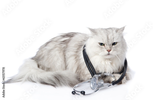 cat with a stethoscope on his neck. isolated on white background