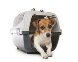 Pets crate transportation