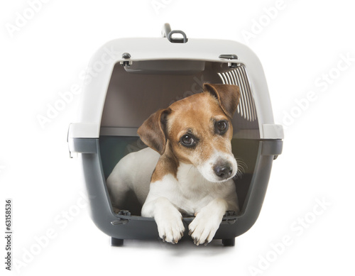 Foto op Canvas Dragen Pets crate transportation