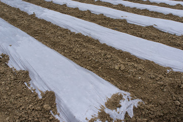 Ground with plastic protecting strips for plant in field