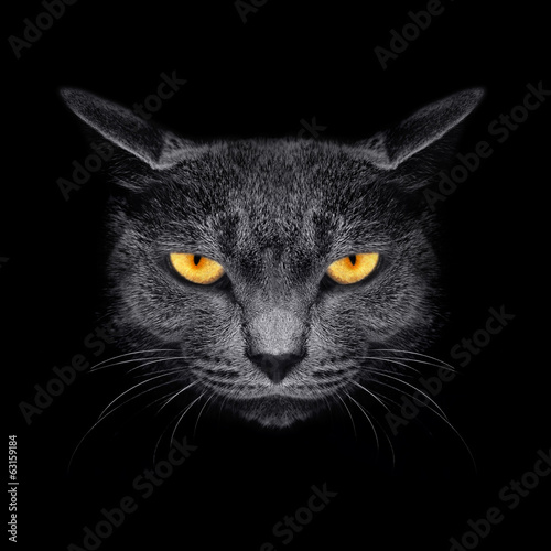 Foto op Canvas Leeuw View from the darkness. Muzzle a cat on a black background.