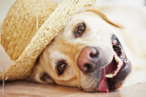 Dog with straw hat