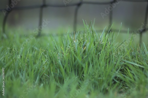 Blurred background with green grass blade and net