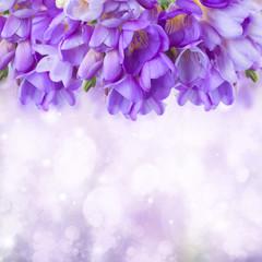 blue freesias flowers  border