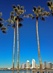 Downtown Skyline View of San Diego from Coronado Island