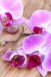 Orchidea con bocciolo