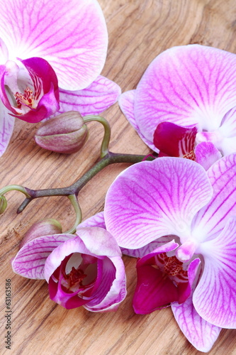 canvas print picture Orchidea con bocciolo