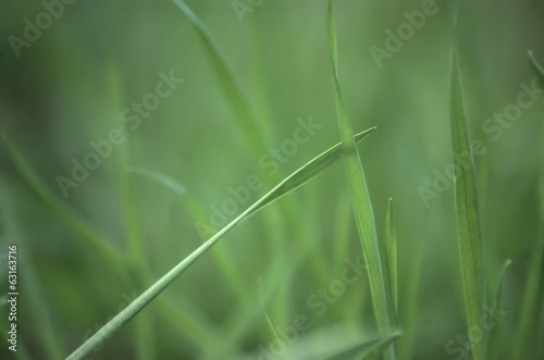 Grass blade on blured green background
