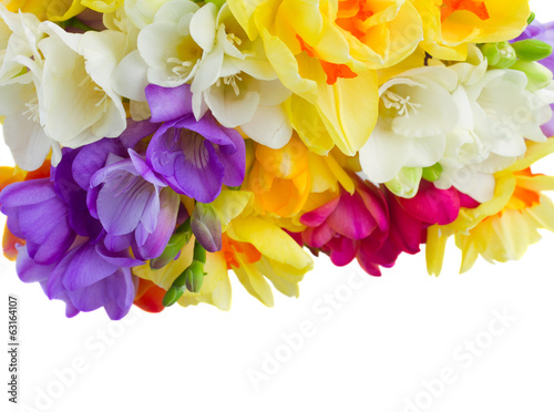 boder of freesias flowers