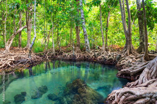 Tha Pom, the mangrove forest in Krabi, Thailand