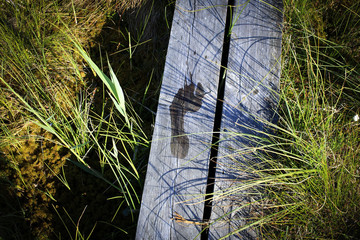 Footprints on Wooden walkway