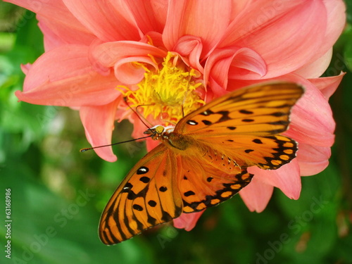 Orange butterfly on the flower