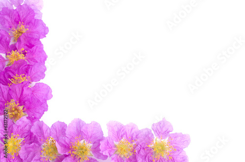 Pretty frame from purple flowers