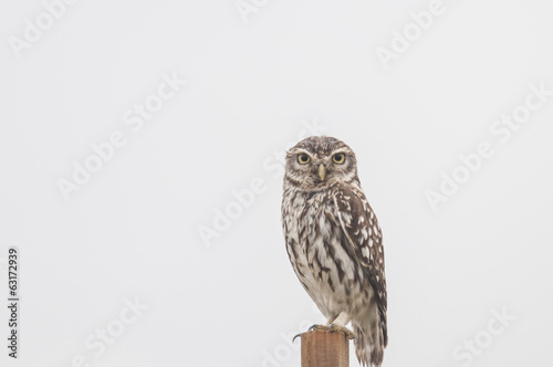 Little Owl series 05