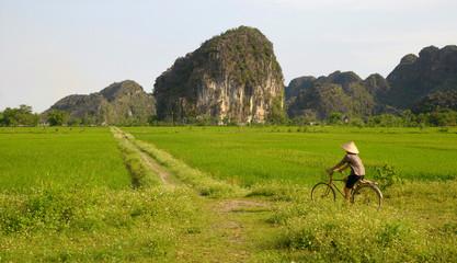 paysage karstique au vietnam
