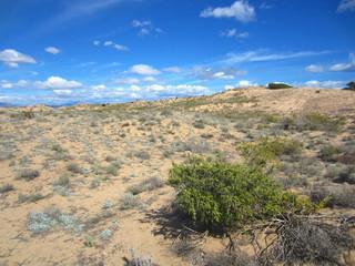 sand dunes with mediterranean vegetation