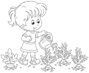 Girl watering carrots