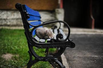 kitten on a bench