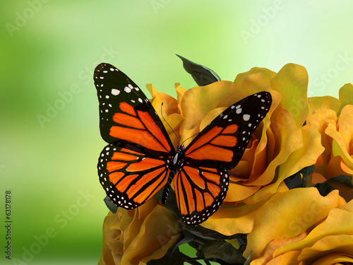 Closeup of butterfly on flower blossom